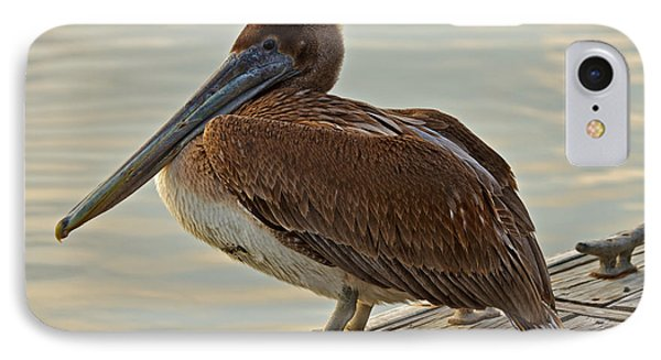 Pelican On The Dock IPhone Case