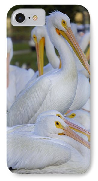 Pelican Pile IPhone Case by Laurie Perry