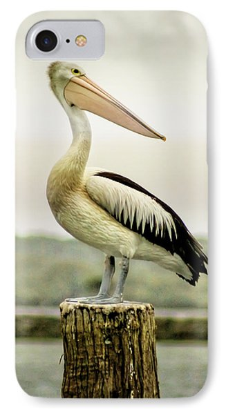 Pelican Poise Phone Case by Holly Kempe