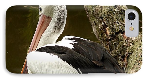 IPhone Case featuring the photograph Pelican Poise by Maria  Disley