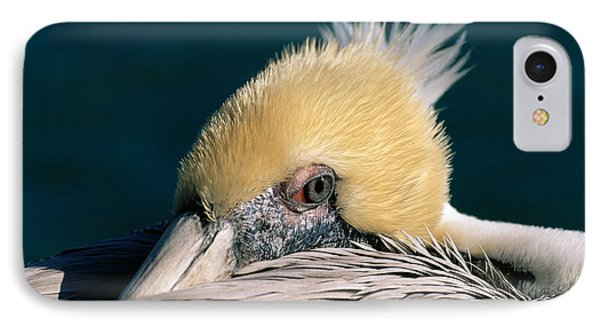 IPhone Case featuring the photograph Pelican Portrait by Bradford Martin