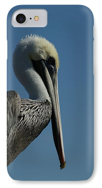 Pelican Profile 2 IPhone Case by Ernie Echols