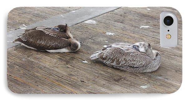 IPhone Case featuring the photograph Pelican Resting by Deborah DeLaBarre