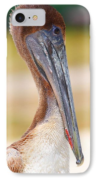 Pelican Up Close At Dry Tortugas National Park IPhone Case