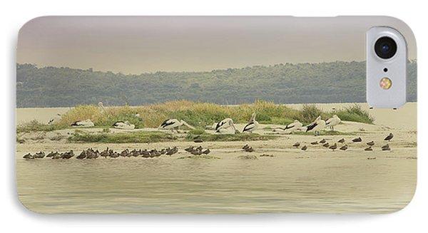 Pelicans At Poddy Shot Phone Case by Elaine Teague
