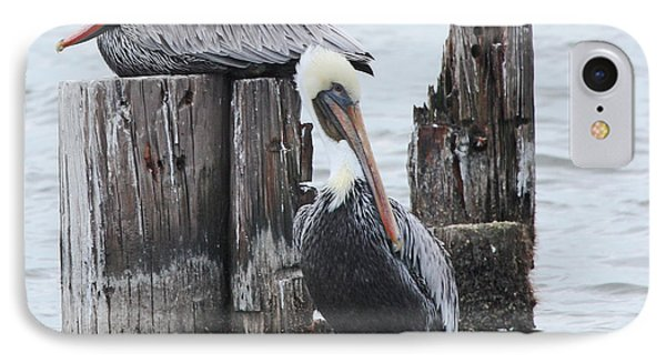 Pelicans Enjoying Lake Ponchartrain IPhone Case