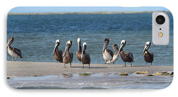 Pelicans Of Bird Island 7 Phone Case by Cathy Lindsey