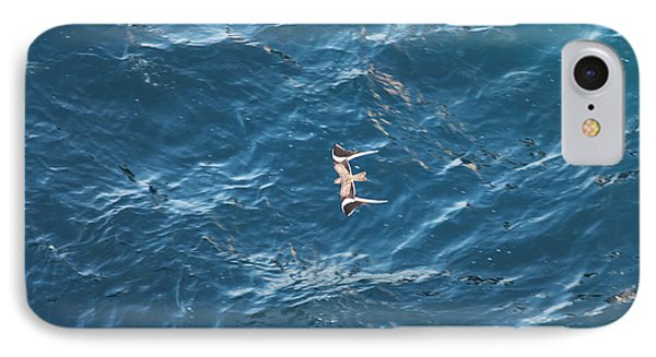 Penant Winged Nightjar 1 IPhone Case