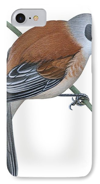 Penduline Tit  Phone Case by Anonymous