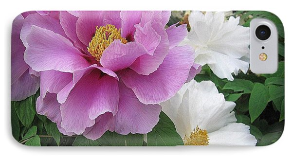 Peonies In White And Lavender IPhone Case