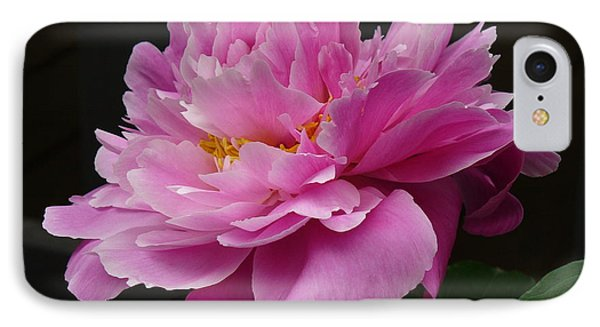 IPhone Case featuring the photograph Peony Blossoms by Lingfai Leung