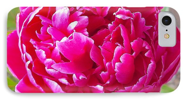 Peony Magnifico IPhone Case by John Norman Stewart