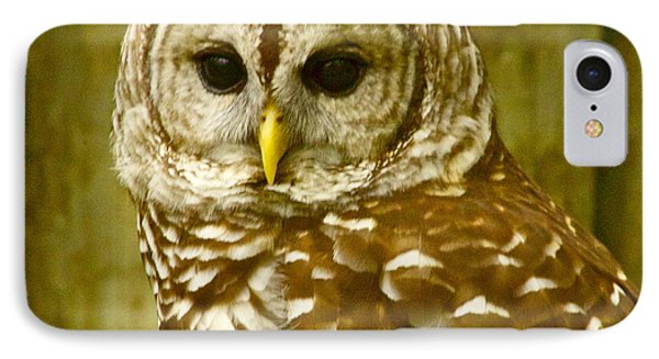 IPhone Case featuring the photograph Perched by Alice Mainville
