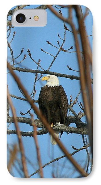 Perched American Bald Eagle  Phone Case by Neal Eslinger