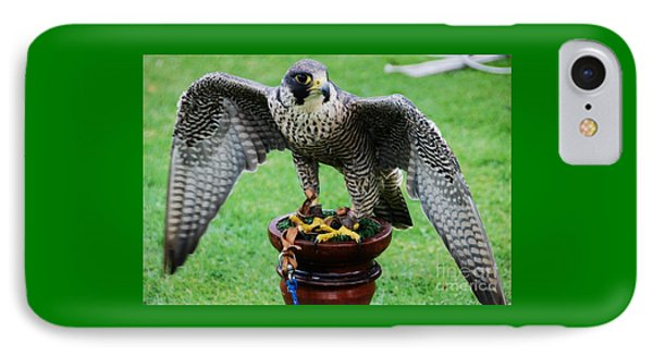 Peregrine Falcon # 1 IPhone Case by Marcus Dagan