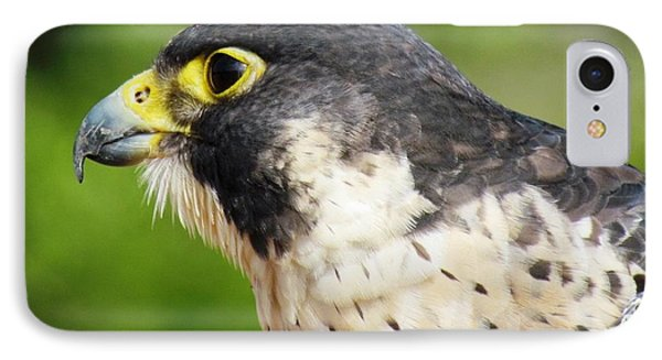 IPhone Case featuring the photograph Peregrine Falcon by Cynthia Guinn