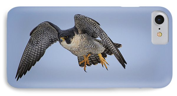 Peregrine Falcon IPhone Case by Gary Hall