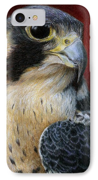 Peregrine Falcon IPhone Case by Pat Erickson
