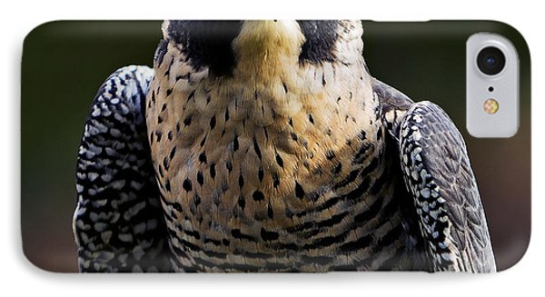 Peregrine Focus IPhone Case by Mary Jo Allen