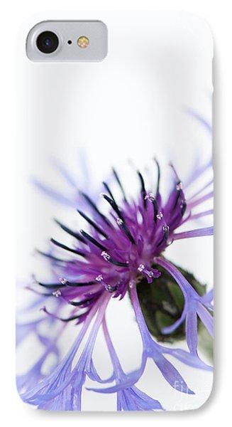 Perennial Cornflower Phone Case by Anne Gilbert