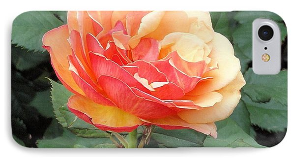IPhone Case featuring the photograph Perfect Rose by Janette Boyd