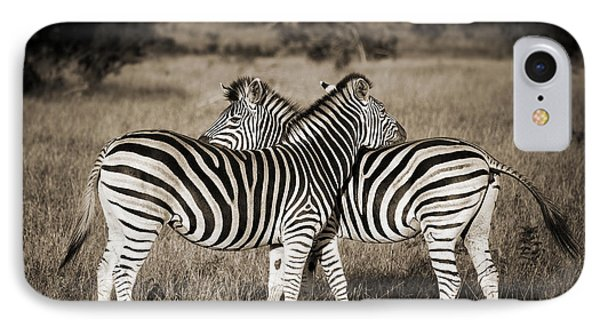 Perfect Zebras IPhone Case by Delphimages Photo Creations