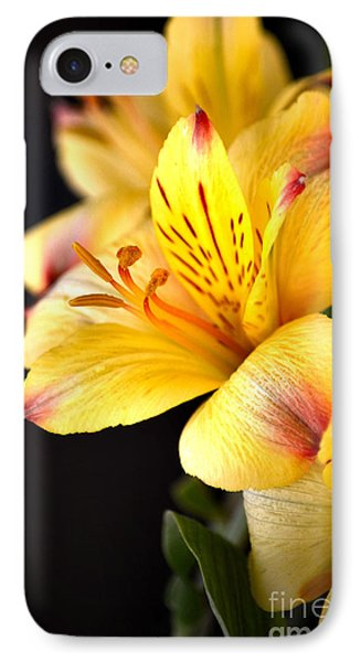 Peruvian Lily IPhone Case by Deb Halloran
