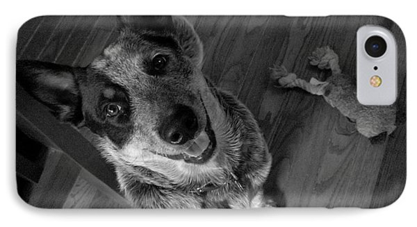 IPhone Case featuring the photograph Pet Portrait - Forrest by Laura  Wong-Rose