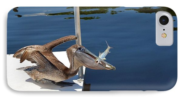Pete The Pelican And The Poor Fish IPhone Case by Pamela Blizzard