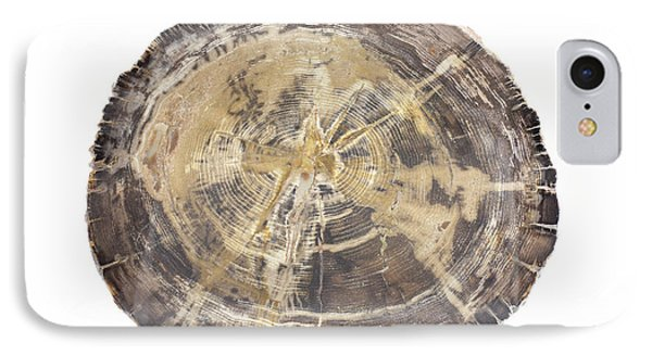 Petrified Hickory Tree Trunk Section IPhone Case by Science Stock Photography