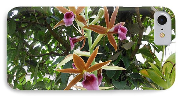 Phaius Orchids IPhone Case by Kay Gilley
