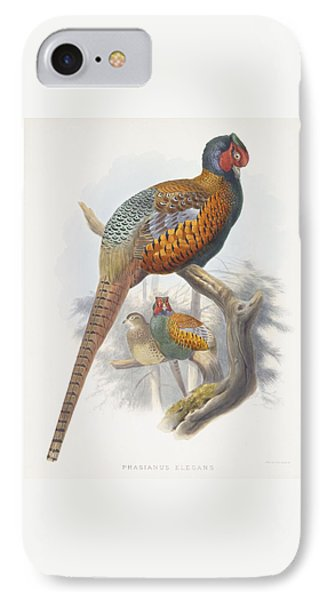 Phasianus Elegans Elegant Pheasant IPhone Case by Daniel Girard Elliot