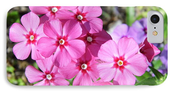 IPhone Case featuring the photograph Phlox Beside The Road by D Hackett