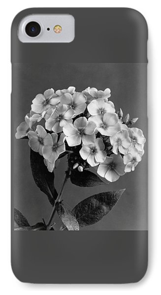 Phlox Blossoms IPhone Case