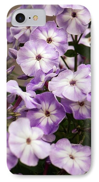Phlox Paniculata 'grey Lady' IPhone Case