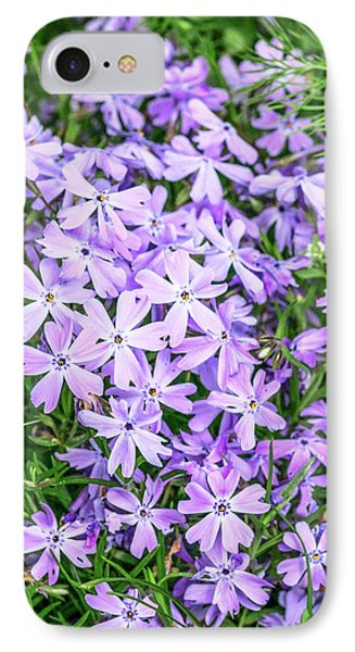 Phlox Subulata 'blue Eyes' Flowers IPhone Case