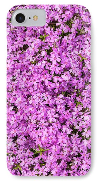 Phlox Subulata 'marjorie' IPhone Case