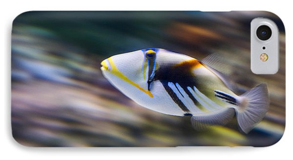 Picasso - Lagoon Triggerfish Rhinecanthus Aculeatus Phone Case by Jamie Pham
