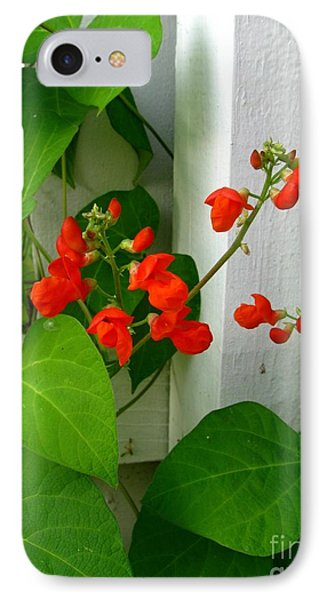 Picket Fence Runner Beans IPhone Case