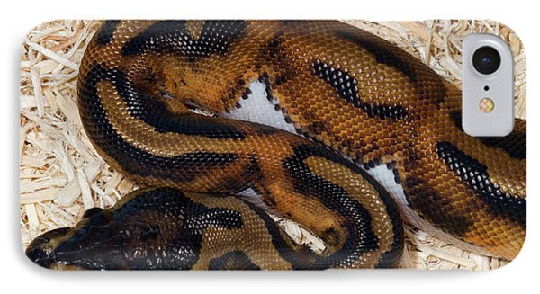 Python iPhone 7 Case - Piebald Royal Python by Nigel Downer
