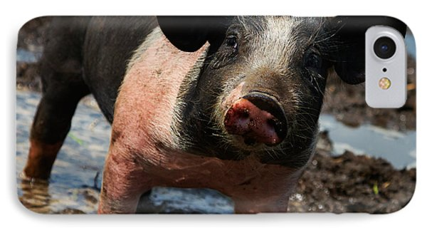 Pig In The Mud IPhone Case