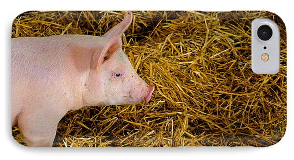 Pig Standing In Hay Phone Case by Amy Cicconi