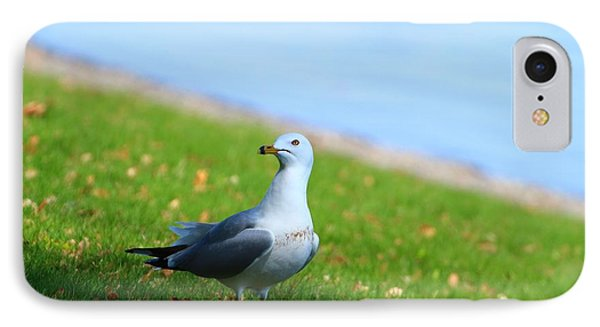 IPhone Case featuring the photograph Seagull At The Park by Lynn Hopwood