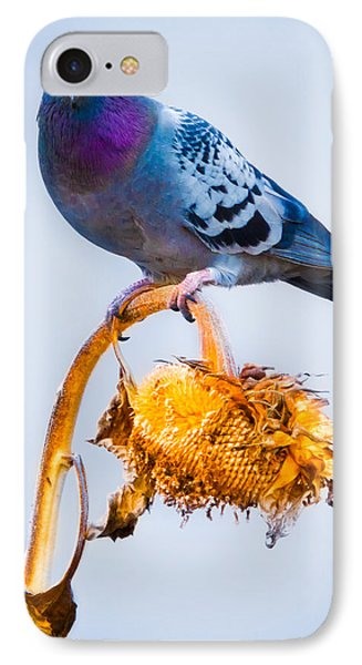Pigeon On Sunflower Phone Case by Bob Orsillo