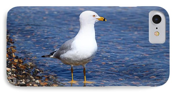 IPhone Case featuring the photograph Seagull Wading  by Lynn Hopwood