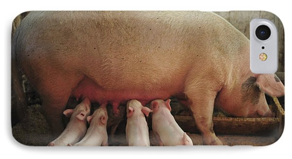 Momma Pig And Piglets Phone Case by Terry DeLuco