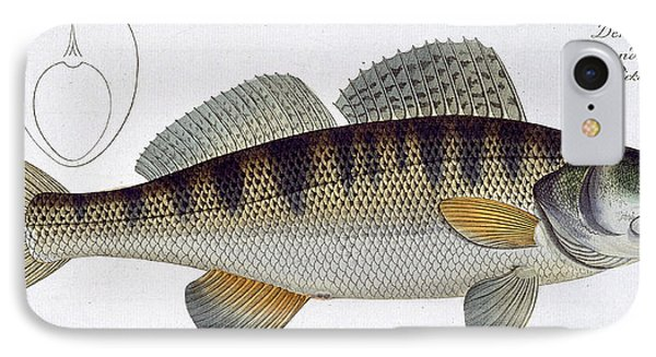 Pike Perch Phone Case by Andreas Ludwig Kruger