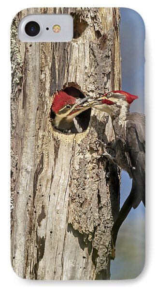 Pileated Woodpecker And Chick IPhone Case by Susan Candelario