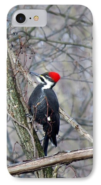 Pileated Woodpecker Phone Case by Diane Mitchell