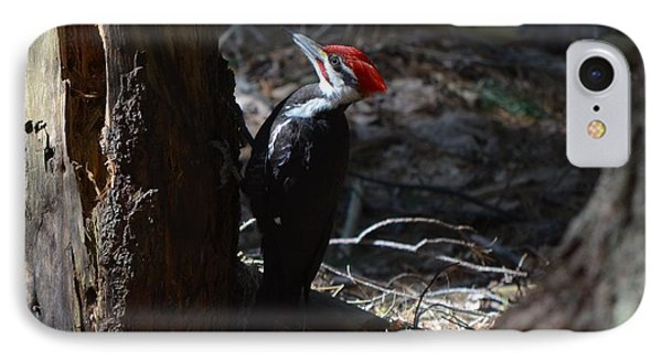 Pileated Woodpecker Phone Case by James Petersen